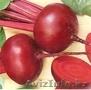 продаю семена свекол(кр столовый),  и редиски